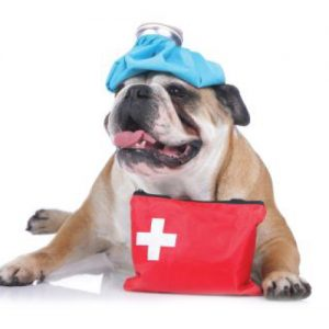 Pet First Aid & CPR Workshop – including Safety and Health Course