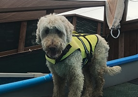 First Visit Reminders or What to Expect At Your Dog First Swim