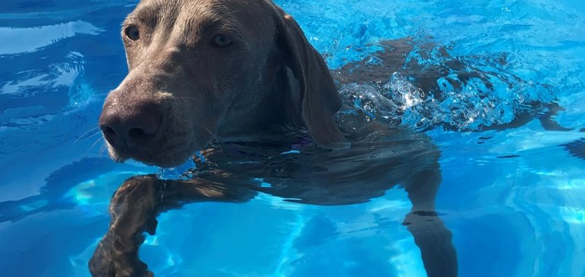 My dog hates the water!  (I hear this lots.)