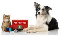"Why take a ""live"" pet first aid class vs. onlne video training?"