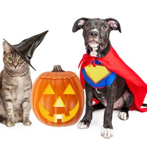 10 Howl'oween Pet Safety Tips!