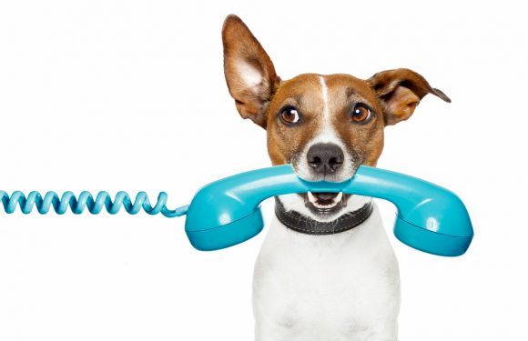 Pet Emergency Phone Numbers