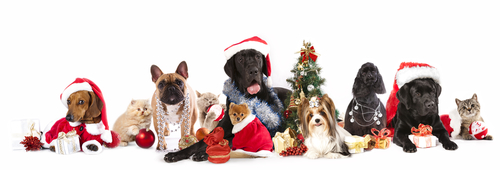 12 Pet Safety Tips for the Holidays